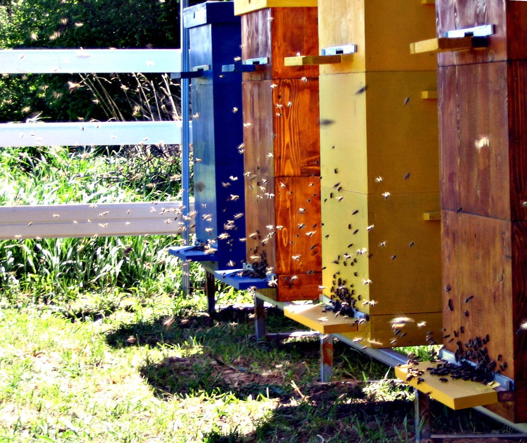 Пчеловодство в двухкорпусном улье