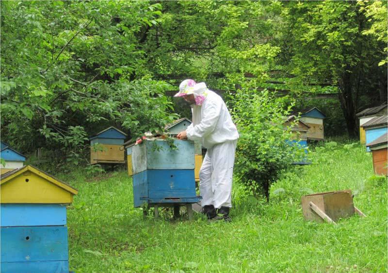 Уход за пчелами в июне