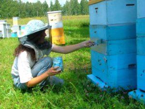 Зачем красить улей для пчел