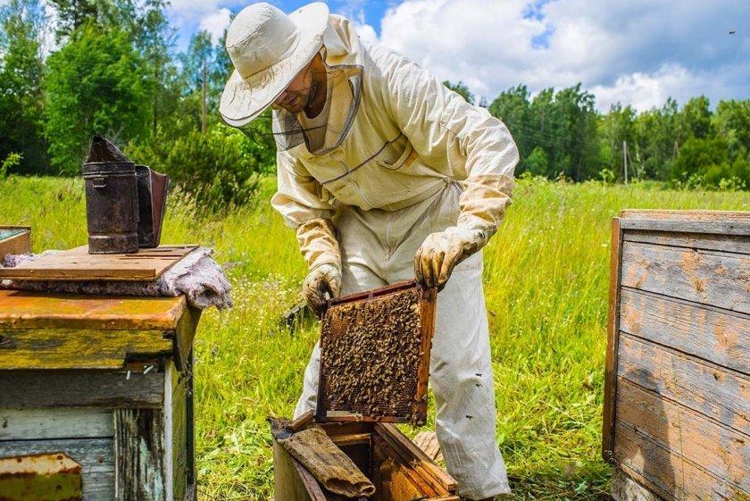 Содержание пчел во владимирских ульях