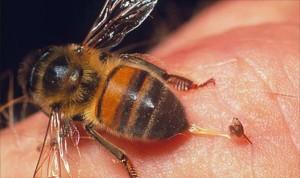 Лечение пчелиным ядом - спасение для суставов