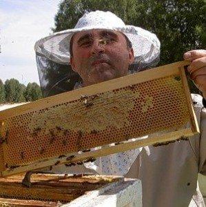 Как сделать отводок пчел