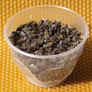 Пчелиный мор