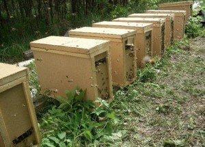 Пчелопакеты - минимальнае пчелосемьи