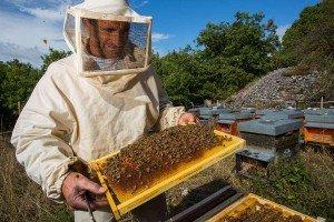 Пчелосемьи содержатся по строгим правилам