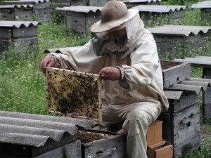 Проверяем работу пчеломатки