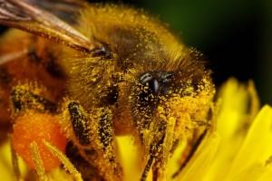 Пыльца - природный безопасный антибиотик