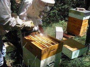 Как лечить пчелосемью фумисаном