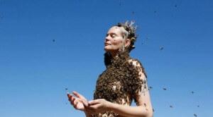 Как перестать бояться пчел