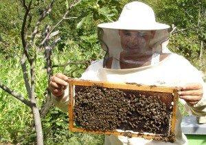 Пчеловоды носят белое