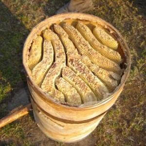 Бортевой мед диких пчел: лечебные свойства, как его принимать