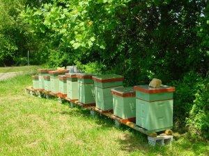 Особенности пчеловождения