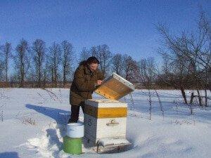 Кормление пчел на зиму