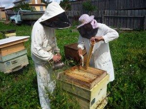 Время сбора меда