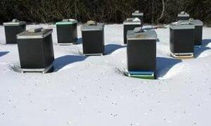 Подготовка пчел к зимовке в средней полосе