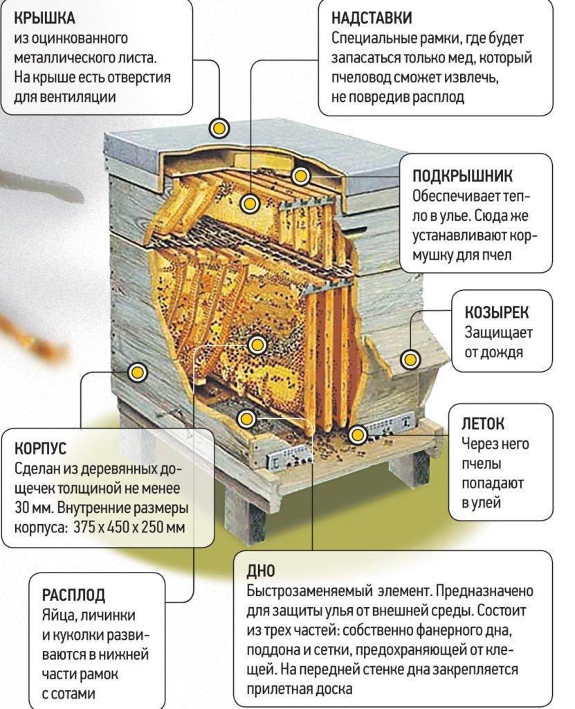 Инфографика - как устроен улей