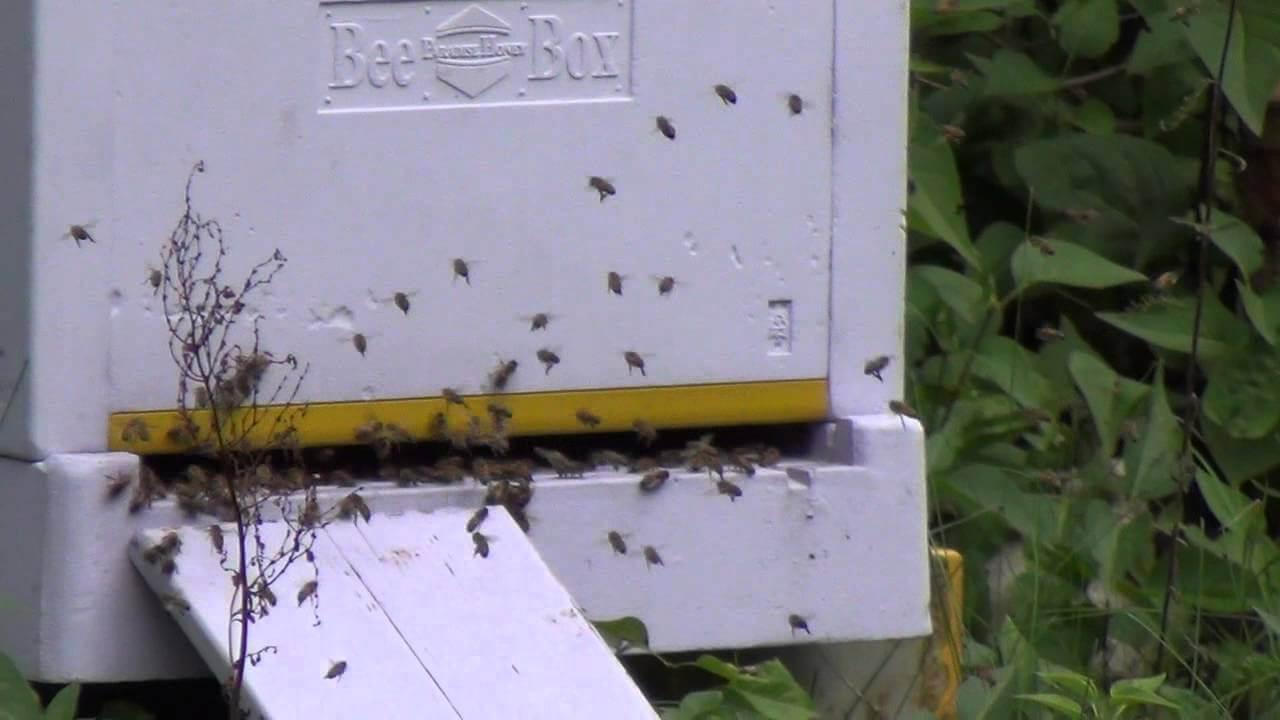 Финский улей bee box на пасеке