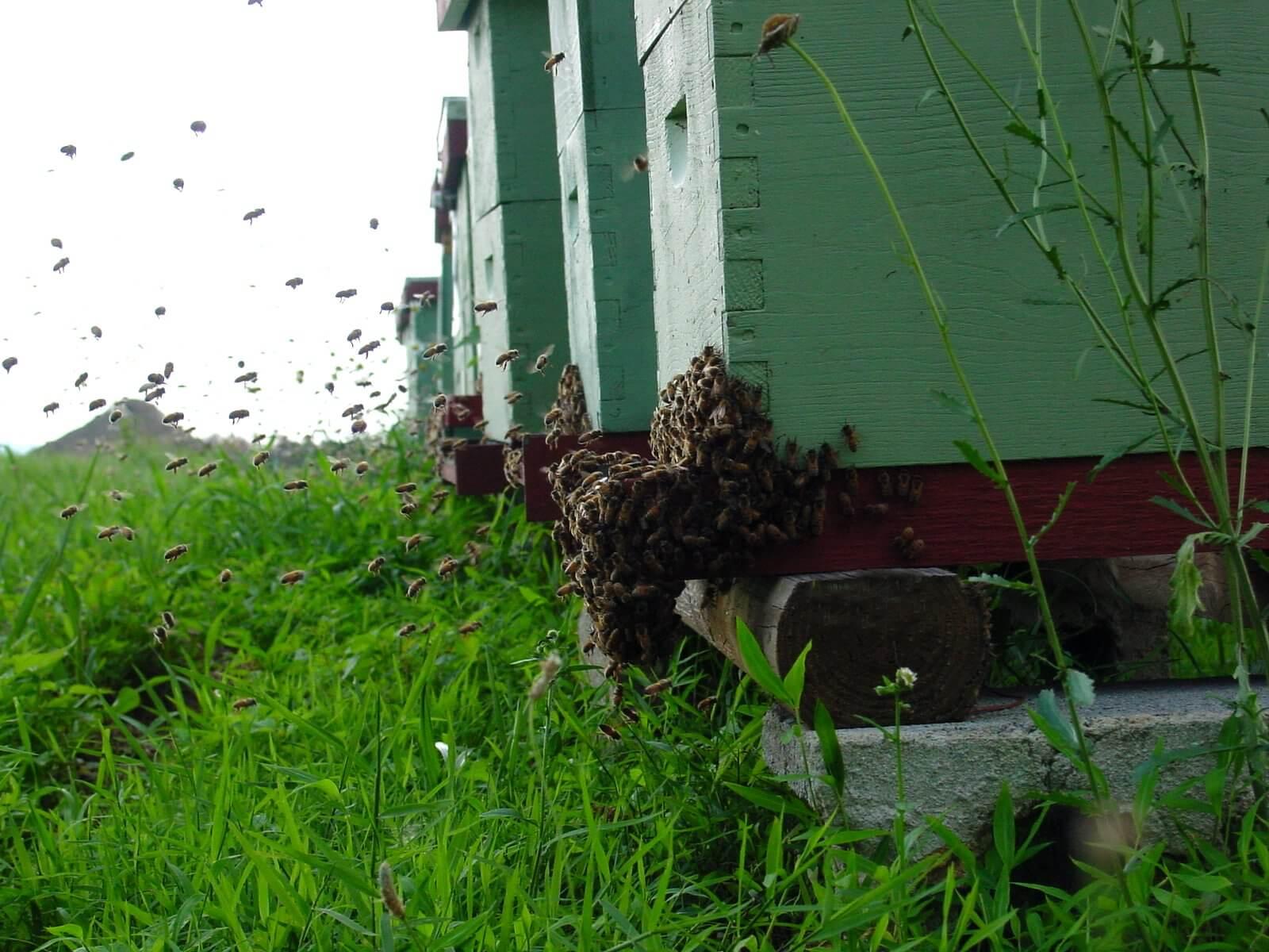 Цена улья с пчелами