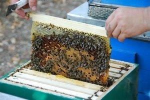 Сколько стоит улей с пчелами?