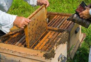Улей с пчелиной семьей