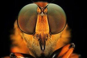 Сколько глаз у пчелы?