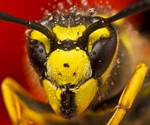Зрение пчел