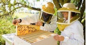 Уход за пчелами в сентябре