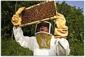 Ветеринарно санитарные правила содержания пчел