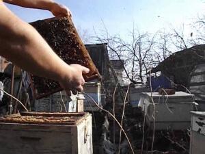 Проверка состояния пчелосемьи
