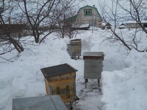 Пчелы на улице в марте
