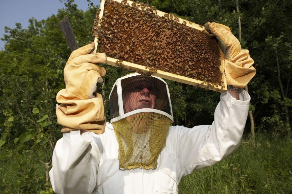 видеофильм про пчеловодство бледные, аккуратные аппетитные