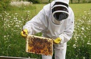 Уход за пчелами в августе