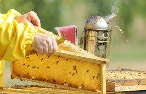 Весенний уход за пчелами