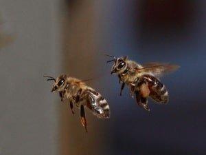 Пчелки за работой