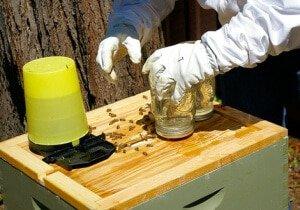 Подкормка пчел зимой сахарным сиропом