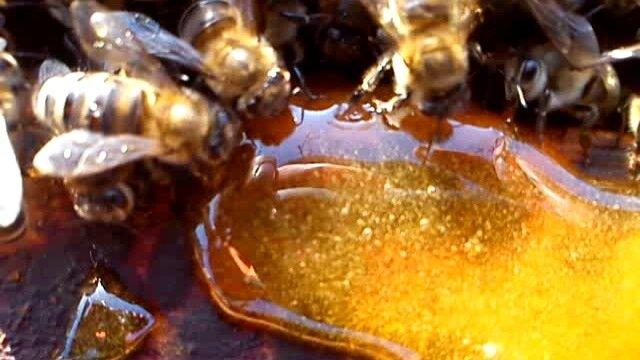 Подкормка пчел медом