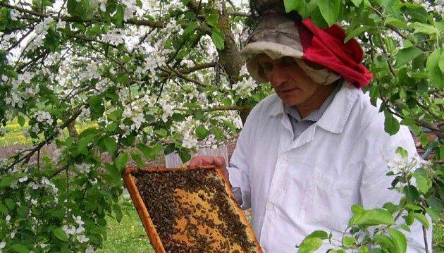 Пчеловодство в апреле