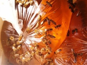 как кормить пчел осенью?