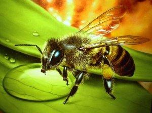 Подкормка пчел осенью