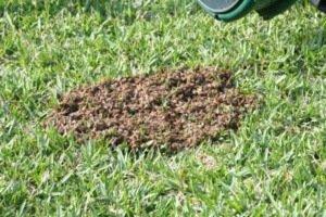 Рой диких пчел во дворе