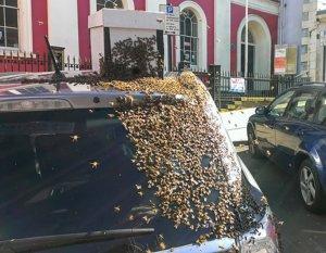 Нападение африканских пчел-убийц