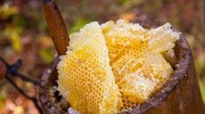 Соты с медом диких пчел