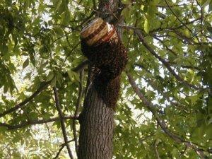 Плетенная ловушка для пчел