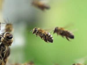 Свободный полет пчелы