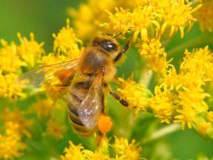 Пыльца может стать причиной аллергии