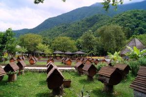 Абхазская пасека