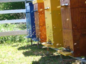 Безроевое содержание пчел