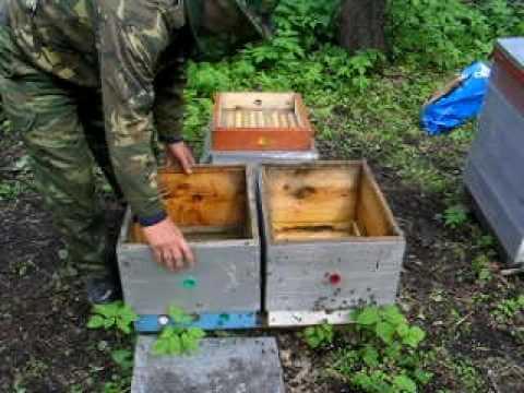 Способы деления пчелосемей на пол лета: когда и как разделить семью