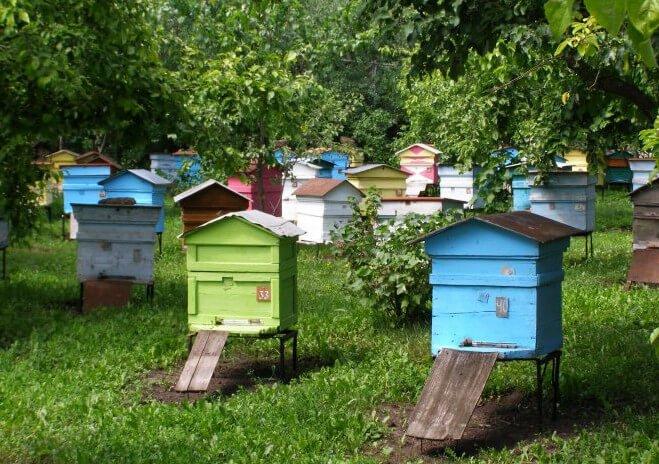 Документы пасеки на пчел и для пчелоприцепа