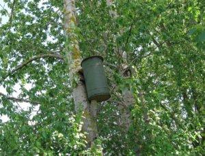 Самодельная ловушка для пчел